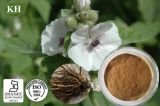 Chinese Herbal Polysaccharides 25 % Extrait de racine Althaea officinalis
