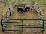 Galvanisiertes Schaf-Metallineinander greifen, welches das temporäre Bauernhof-Fechten einzäunt