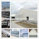 Il pollame della struttura d'acciaio di Profesional alloggia la costruzione