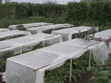 Agriculture CoverおよびCrop ProtectionのためのNonwoven Fabric