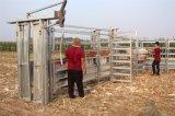 新しいデザイン牛圧搾シュートの牛クラッシュ