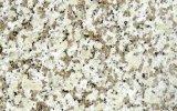 白い片麻岩