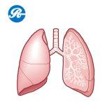 炎症抑制の使用のためのUSP Cefotaximeナトリウム