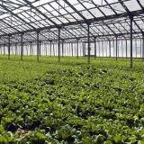 Serra di verdure di vetro commerciale di vendita calda in Cina