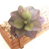 Подарок Искусственные растения Succulents букет для украшения