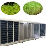 De plus en plus automatique de fèves germées la plantation de la germination de la machine (WSYJ)