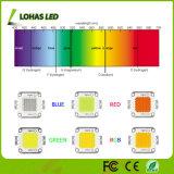 High Power COB LED Chip 10W 20W 30W 50W 100W LED COB