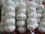 Chinois de l'ail frais congelé Blanc pur