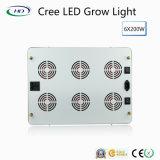 I chip 6*200W LED del CREE si sviluppano chiari per coltura commerciale