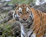 Las jaulas de los animales de la cuerda de malla