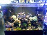 Azul y blanco espectro de luz Dimmable Marine Aquarium LED 72W