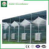 Tipo invernadero de Xinhe Venlo de la hoja de la PC con precio bajo de la buena calidad