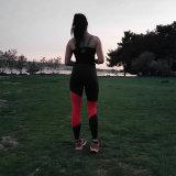 El deporte caliente elegante de la aptitud de la yoga de la venta arropa los pantalones (3050)