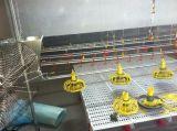 Automatisches Geflügelfütterung-System