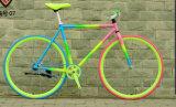 700c 조정 기어 자전거 중국 Fixie는 제조자를 자전거를 탄다
