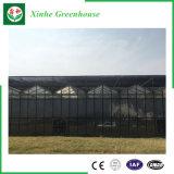 Jardim Multi-Span comercial de gases com efeito de vidro temperado