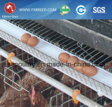 Stahl galvanisierte Geflügel-Rahmen für 5, 000 - 10, 000 Schicht-Vögel (A-4L120)