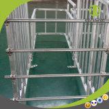 Parada de acero galvanizada de la gestación del cerdo de la fábrica de la buena calidad