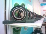 Ucp Bearing Units / Mounted Bearing / Block Bearing (UCP207 UCP207-20 21 22)