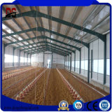 Camera di pollo della tettoia dell'azienda avicola di disegno della costruzione della struttura d'acciaio