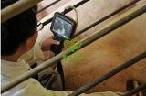 Varredor veterinário do ultra-som do punho do ultra-som de My-A016A