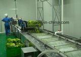 Machine à laver de légume de norme internationale