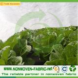 Nonwoven Fabric para cobertura vegetal de PP