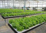 Wasserdichte LED wachsen für Pflanzenfabrik hell