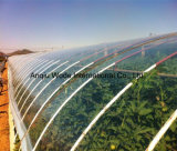 Film des Gewächshaus-200microns mit UVschutz/Multi-Überspannung Plastik-Film mit WasserkulturSyatem Gewächshaus für landwirtschaftliches