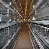 La volaille automatique de qualité posent des cages (l'usine professionnelle)