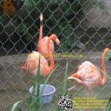 X-Neigen dekorativer Edelstahl geknotete Kabel-Zoo-Tiereaviary-Vogel-Treppen-Balkon-Balustrade-Aufhebung-Brücken-Geländerhelideck-Grün-Wand Seil-Filetarbeit