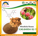 Het Uittreksel van Rosea van Rhodiola met Salidroside 5%