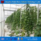 Tunnel van de Serre van de Spanwijdte van de Stijl van Azië de Multi Poly voor Tomaten/Aardbeien