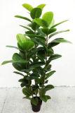 Piante artificiali di buona qualità dell'albero di quercia 1029-69-3b