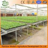 El semillero de efecto invernadero de Aluminio de bajo coste para la agricultura comercial