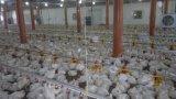 Equipo de granja automático de pollo de las aves de corral para la capa del criador de la parrilla