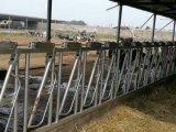 암소 또는 가축 담 중국제
