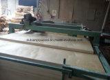 Verschiedene Typen des Furnierholzes mit Pappel-Gesicht und rückseitigem Furnier-Blatt