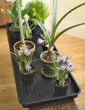 Cassetto di plastica di impregnazione del Flowerpot del POT di fiore dei pp Ruber