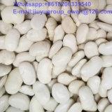 中間の白く新しい穀物の白い腎臓豆