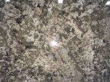 Зеленый Namib гранитные плиты для кухни и ванной комнатой/стены и пол
