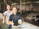 家畜および家禽育成のためのUnigrowの供給の添加物