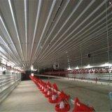 Непосредственно на заводе стали структуры птицы дома птицеводства/Цыпленок с оборудованием