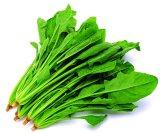 Polvere dell'estratto degli spinaci