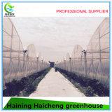 Serre chaude hydroponique de film agricole de PVC