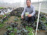 Bio- fertilizzante di Unigrow su qualsiasi piantatura di verdure fogliare