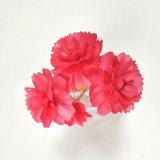 Diametro Handmade personalizzato 6cm 2PCS/Bouquet Canation rosso del fiore asciutto di Sola per il diffusore a lamella domestico
