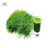 Il frumento organico certificato iso di alta qualità erba la polvere della spremuta