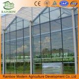 Tipo de Venlo Comercial/agrícolas estufa de vidro para produtos hortícolas/frutos/Flores