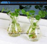 Innendekoration-Blumen-Wasserpflanze-hängender Vasen-Behälter